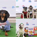 Celeb Pet Crusoe & General Mills Celebrate Premiere of Secret Life of Pets
