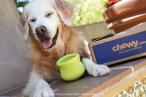 chewy.com delivers pet happiness