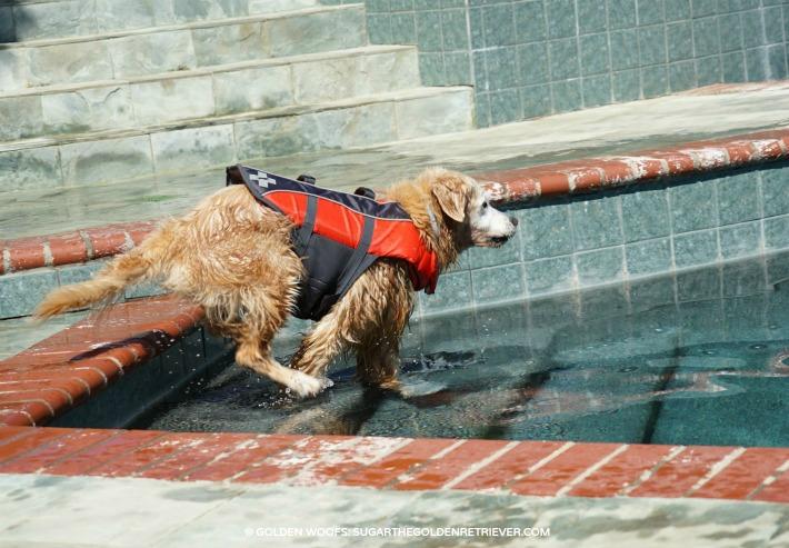 dog pool safety entrance