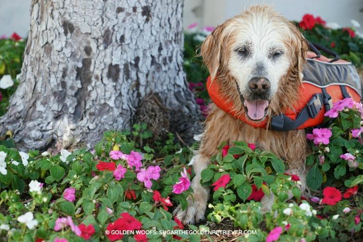 dog pool safety tips
