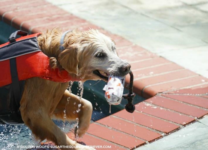dog swim do's and tips