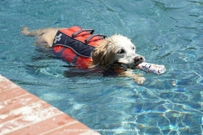 dog swim pool safety tips