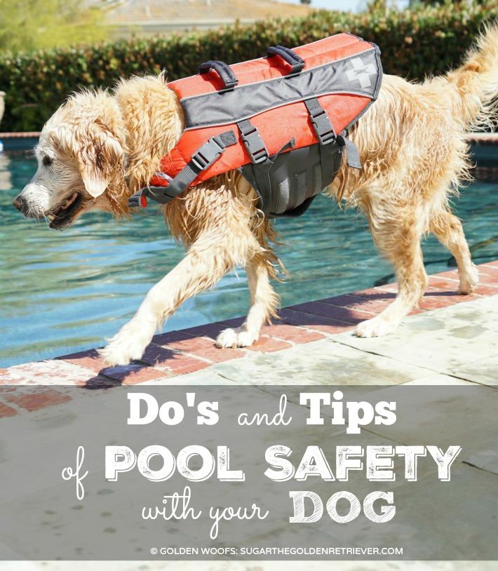 dog swim pool safety