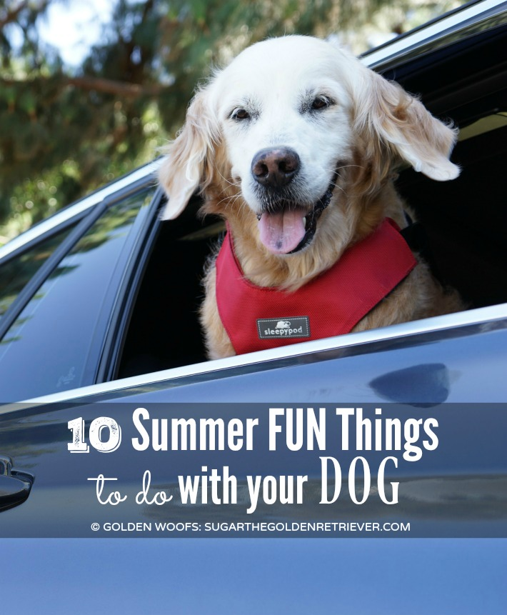 Summer FUN Dog Things