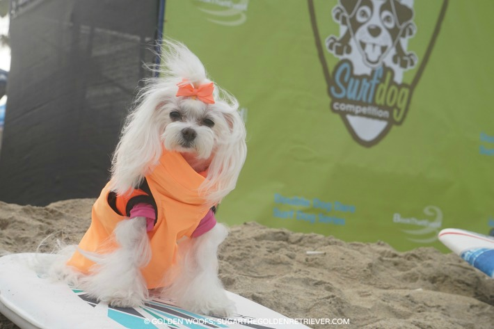 Brazilian Flofy Suring Dog