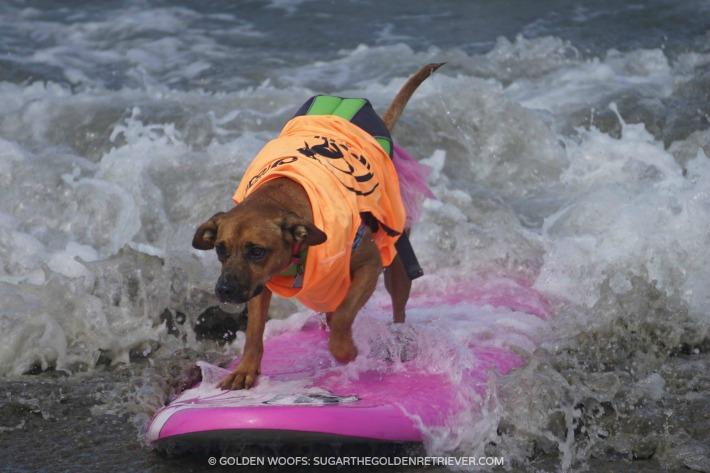Giselle Surfing Dog