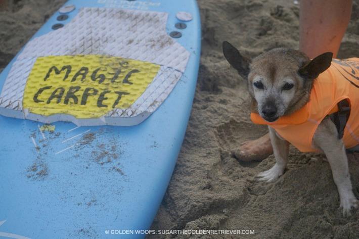 Kihei Surf Dog