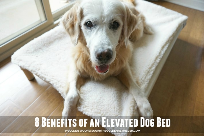 Is An Elevated Dog Bed Right For Your Dog 8 Benefits