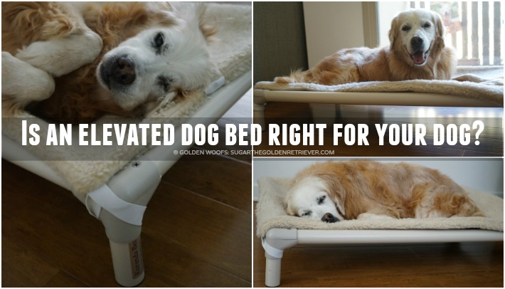 Is an elevated dog bed right for your dog? 8 Benefits #KurandaBed