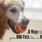 3 Ways to Make Your Dog Feel Like An Olympian