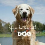 Life is Better With A Dog #NationalDogDay
