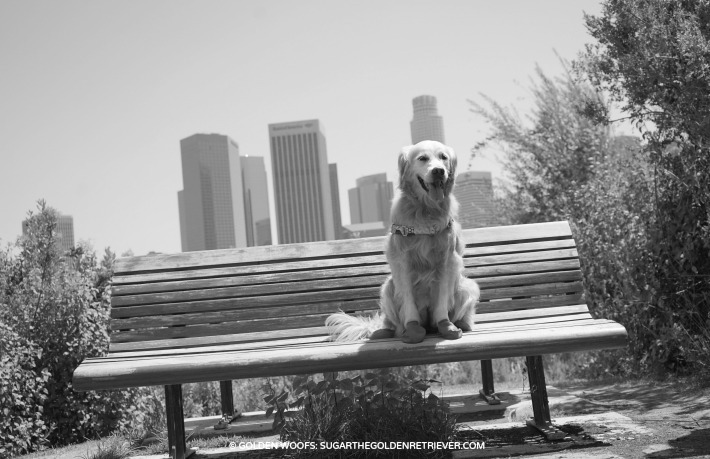 Vista Hermosa Park -bench