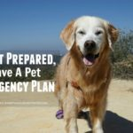 Be Pet Prepared, Have A Pet Emergency Plan #BlogPaws