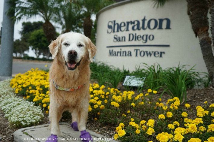 SPGDOG Sheraton San Diego