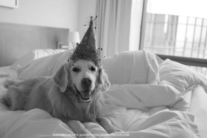 SPGDOG dogfriendly Westin Bonaventure
