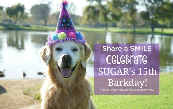 senior dog birthday