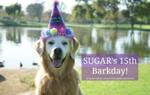 senior dog 15th Barkday