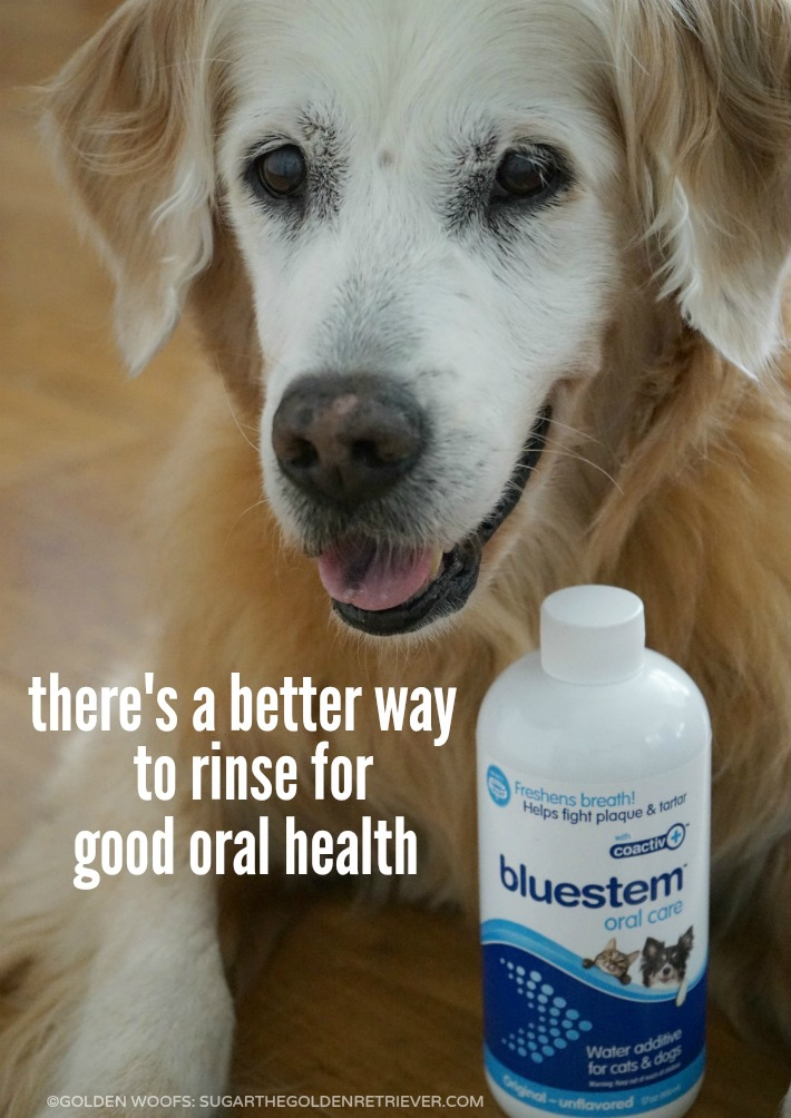 bluestem oral care water additive