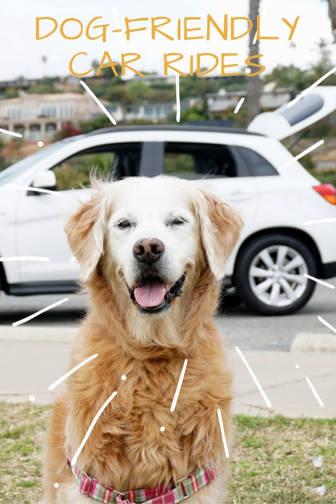 dog friendly car reviews