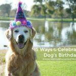 15 Ways to Celebrate Your Dog's Birthday