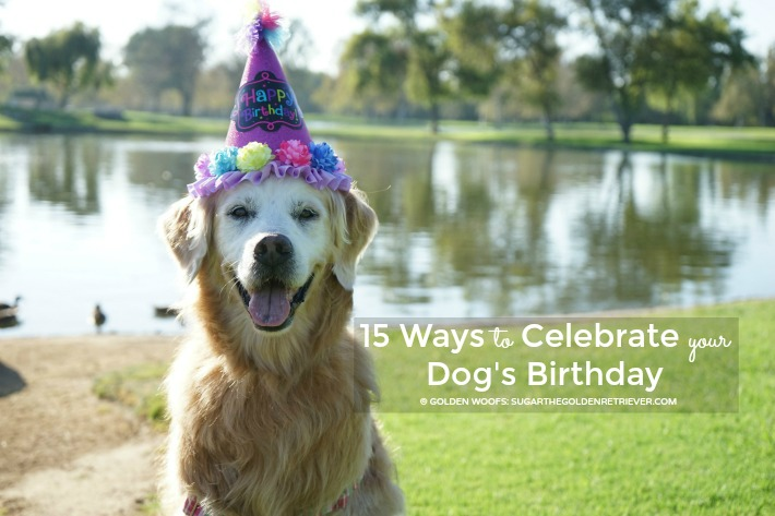 15 Ways to Celebrate Your Dog's Birthday