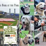 White Sox Attempt to Set Most Dogs at a Sporting Event #SoxDogs