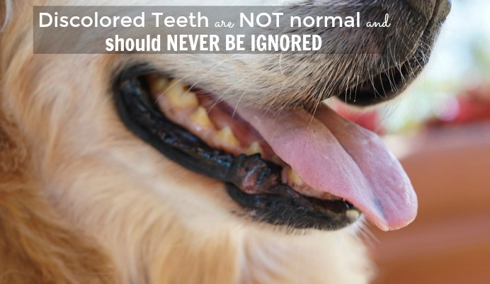 discolored dog teeth