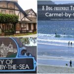 8 Dog-friendly Things to Do in Carmel-by-the-Sea