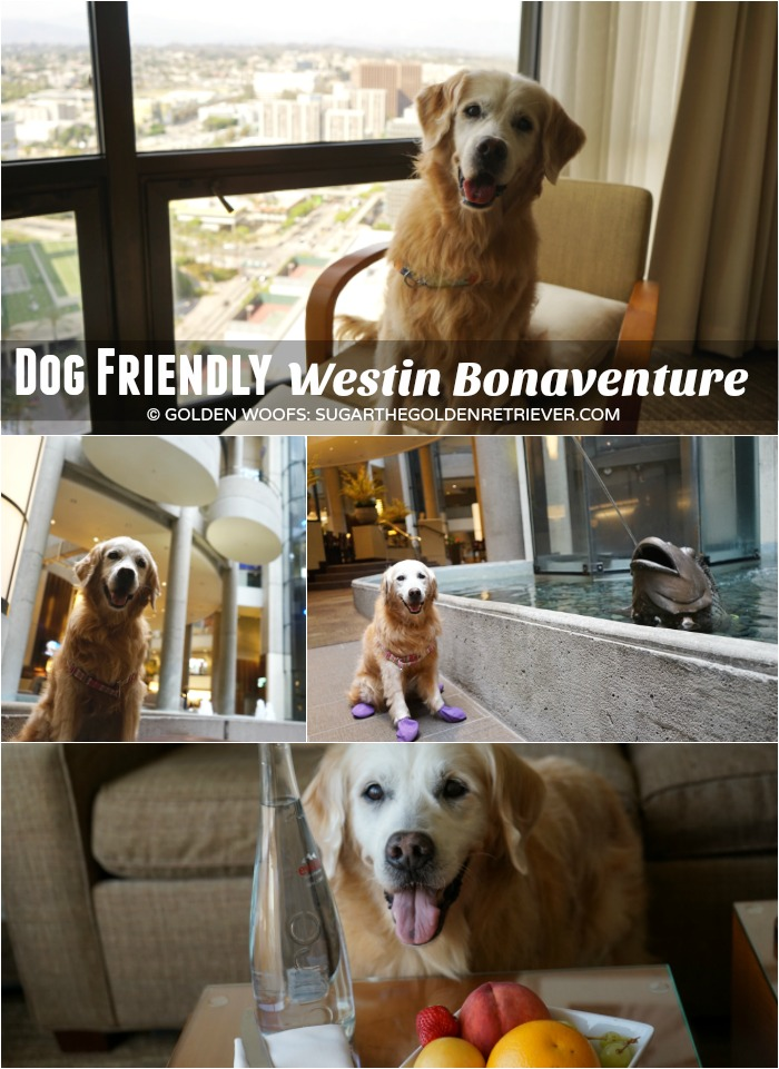 dog friendly westin bonaventure