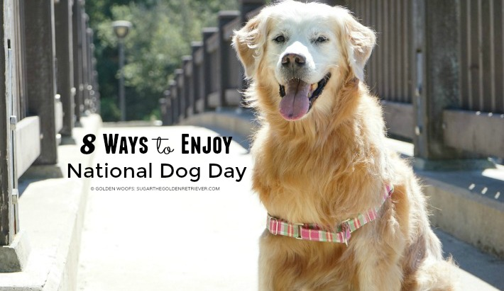 8 Ways to Enjoy National Dog Day and Be #SleepypodSafe