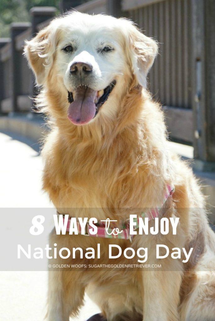 enjoy national dog day