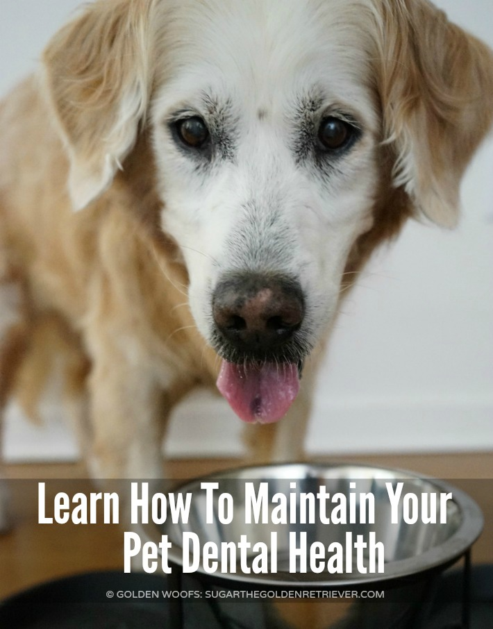 how to maintain pet dental health