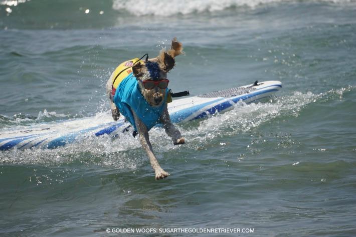 jump celebrate surfing dog