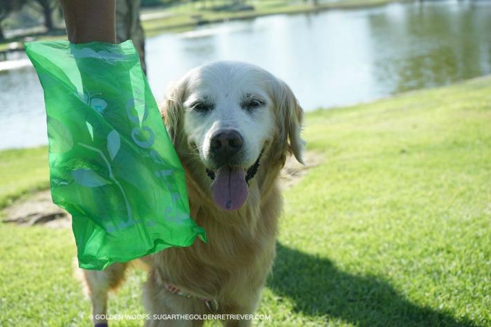 large FRISCO dog poop bags
