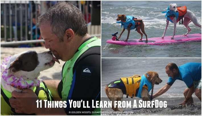 11 Things You'll Learn from A SurfDog #SurfDogUnleashed