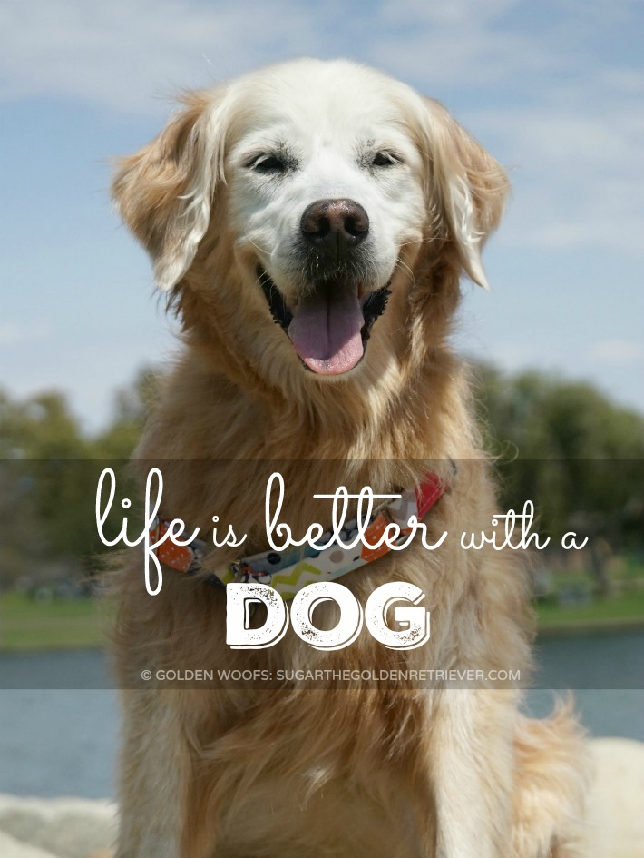 4bef4743dd life is better with a dog - Golden Woofs