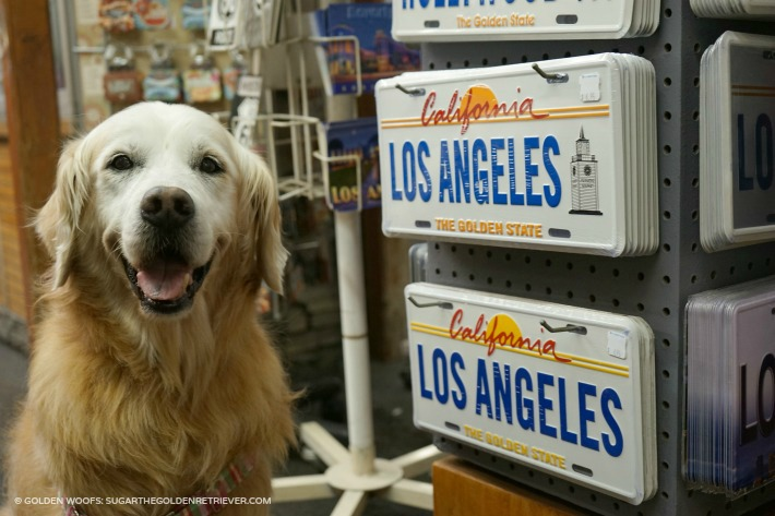 los angeles pet travel