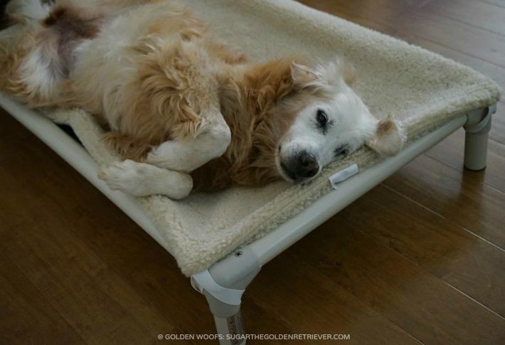 relaxing kuranda dog bed