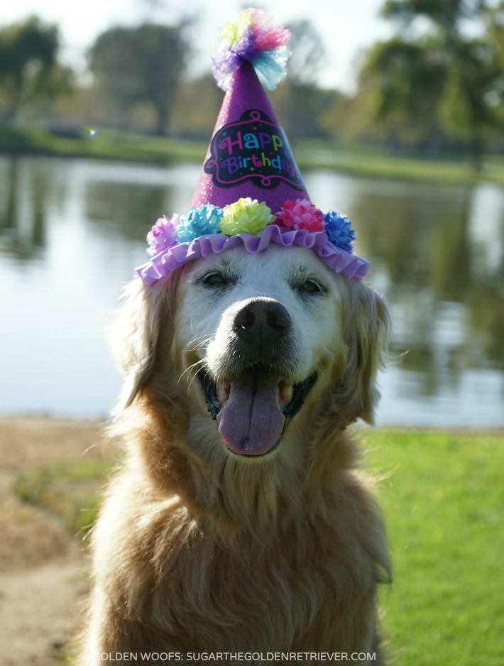 take dog birthday photos