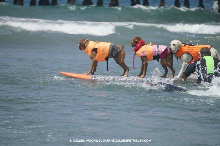 team work dog surfing