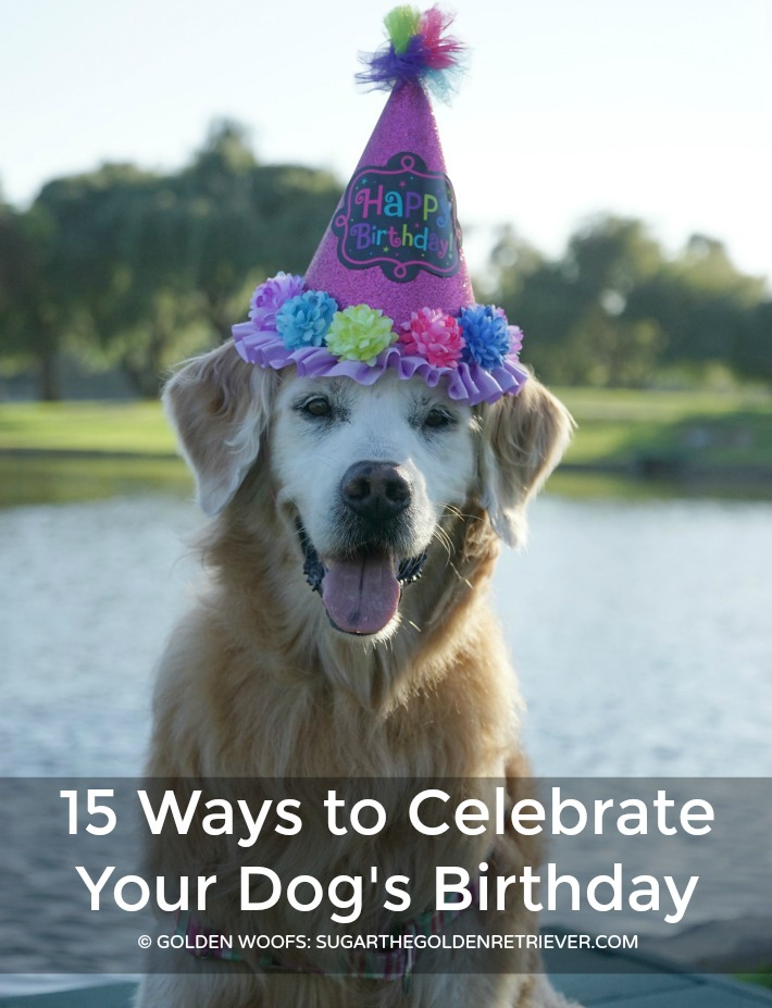 ways celebrate dog birthday