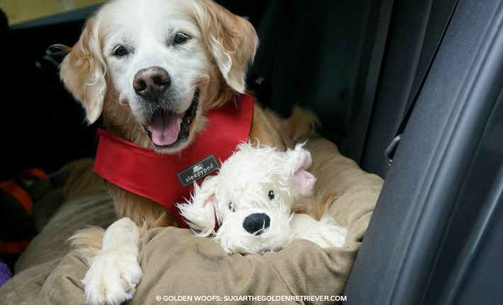 3 Do's Car Safety | Buckling Up Your Dog! #BeSleepypodSafe
