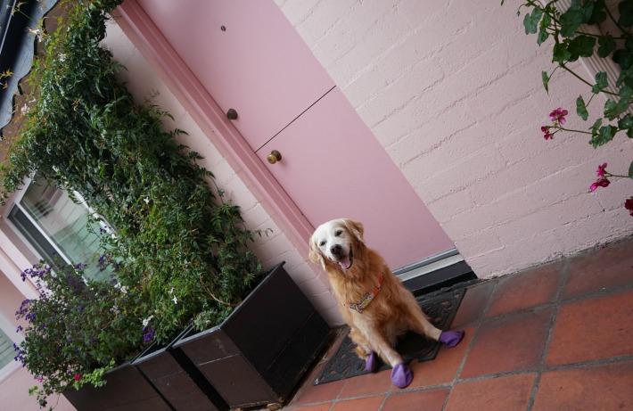 Hofsas House dog friendly cottage