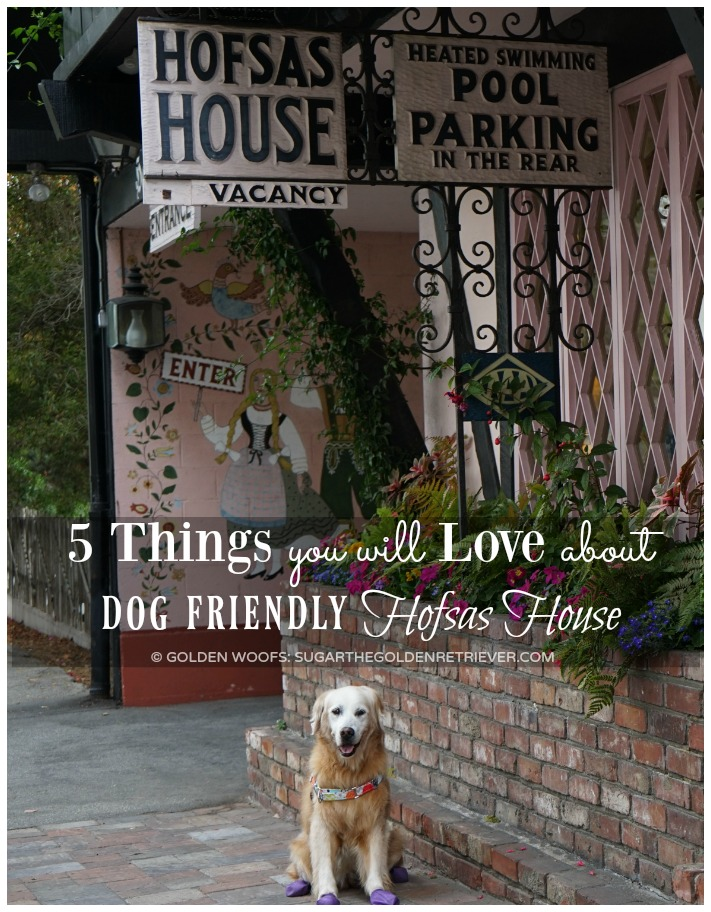 Love About Dog Friendly Hofsas House