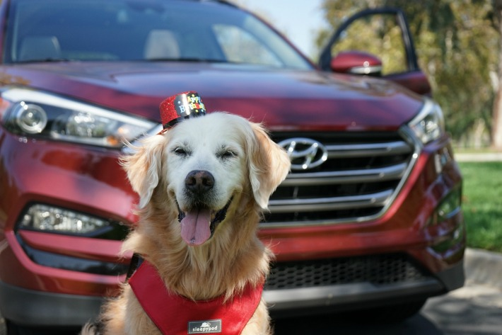 dog friendly car ride Hyundai Tucson