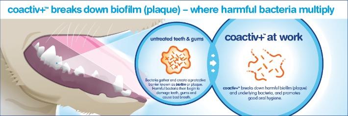 bluestem coativ+ technology pet dental health