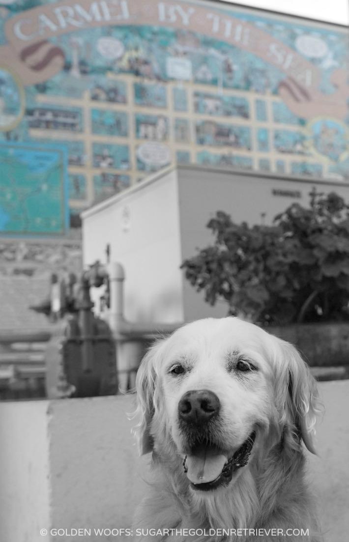 Carmel By The Sea Hotel Dog Friendly