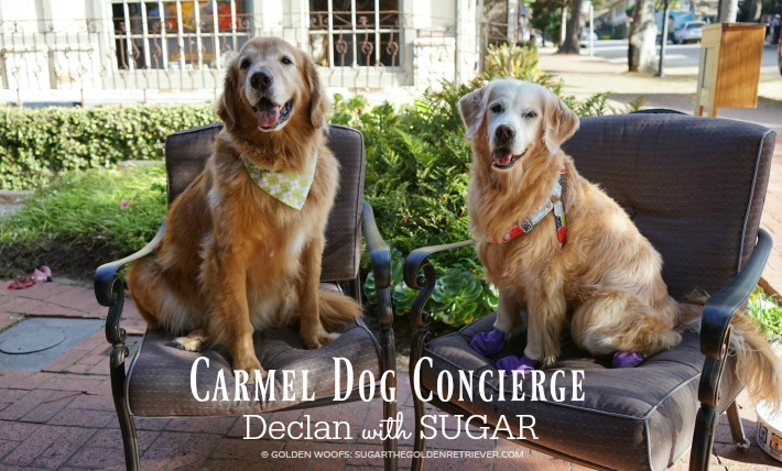 Carmel Dog Concierge