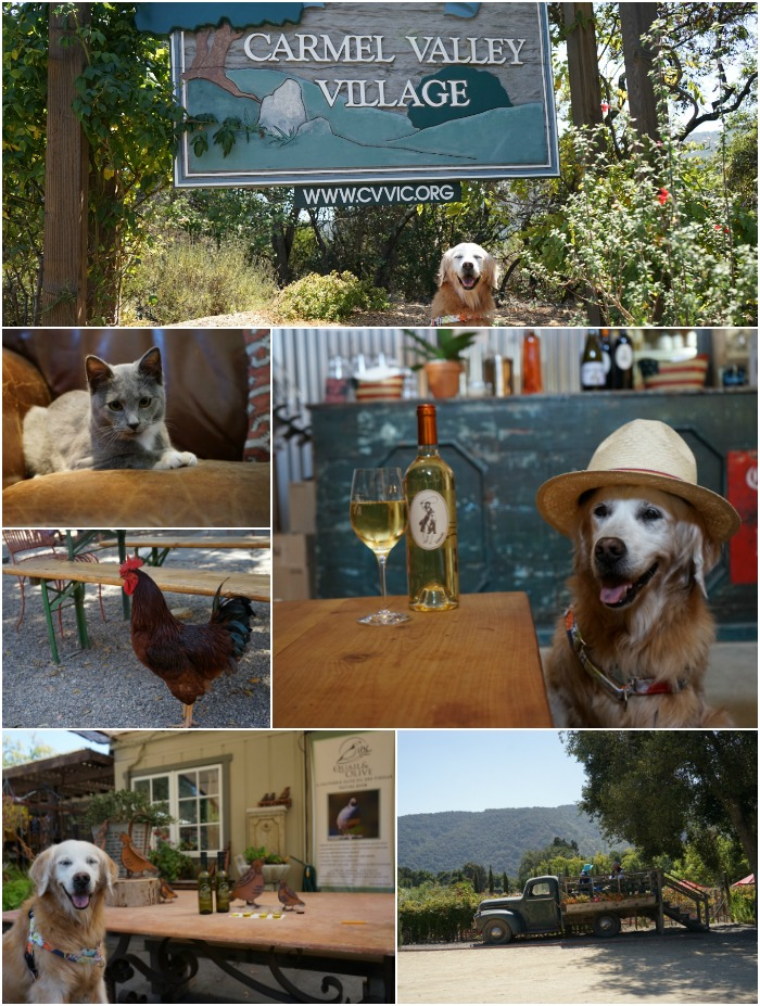 dog friendly Carmel Valley Village