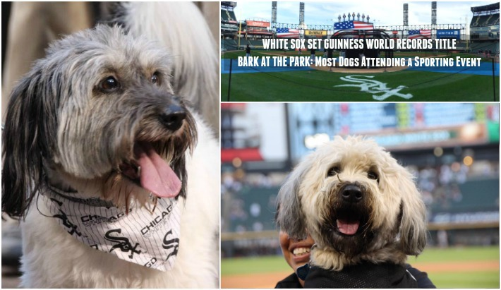 chicago white sox set guinness world records